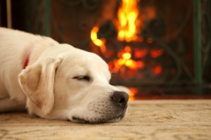 A yellow labrador retriever puppy sleeping in front of a roaring fire.